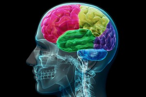 Can Concussions Intrefere With Brain Function